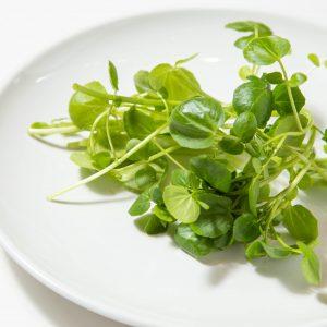 やさい村大地 赤坂田町通り店の野菜